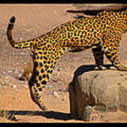The Spotted Cat Poster