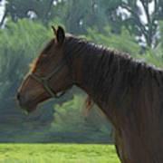 The Stallion Poster by Steve K