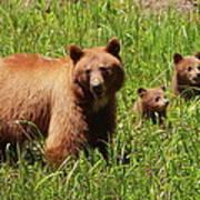 The Three Bears Poster