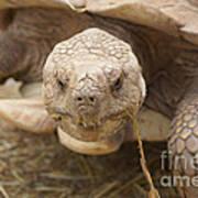 The Tortoise  Poster