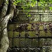 The Wall Ta Prohm 2 Poster