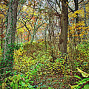 The Woods In Autumn Poster