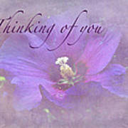 Thinking Of You Greeting Card - Rose Of Sharon Poster