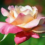 Thorns Have Roses Poster by Melanie Moraga