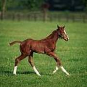 Thoroughbred Mare, National Stud Poster