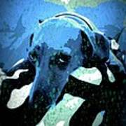 Those Puppy Dog Eyes Poster