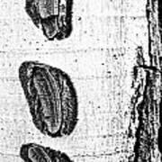 Three Bites Poster