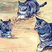 Three Cats In Dry Grass Poster