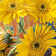 Three Daisy's And Butterfly Poster