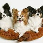 Three Dogs Poster
