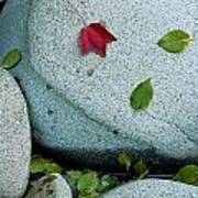 Three Fallen Leaves Lie On A Rock Poster