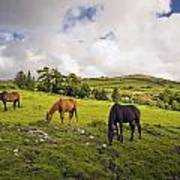 Three Horses Grazing In Field Poster