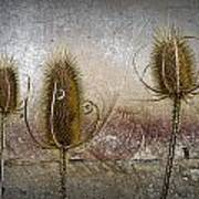 Three Prickly Teasels Poster