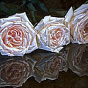 Three Roses Still Life Poster
