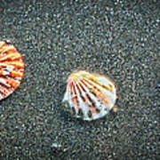 Three Sea Shells Poster