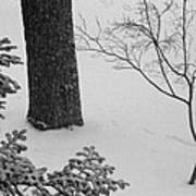 Three Trees In Snow Poster