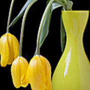Three Yellow Tulips Poster by Garry Gay