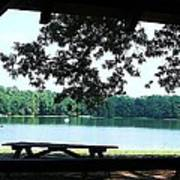 Through The Pavilion At Trap Pond State Park Delaware  Poster
