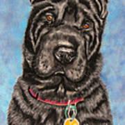 Tia Shar Pei Dog Painting Poster