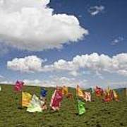 Tibetan Prayer Flags In A Field Poster by David Evans