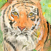 Tiger In The Meadow Poster by Delores Swanson