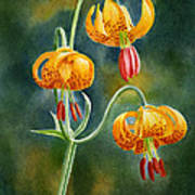 Tiger Lilies #3 Poster