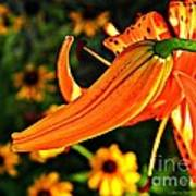 Tiger Lily Bud And Bloom Poster