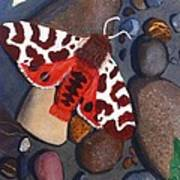 Tiger Moth On River Rocks Poster by Amy Reisland-Speer