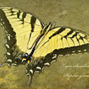 Tiger Swallowtail Butterfly - Papilio Glaucas Poster