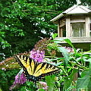 Tiger Swallowtail By The Bird Feeder  Poster