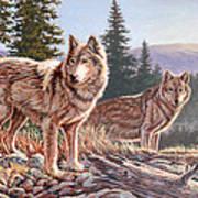 Timber Ridge Poster