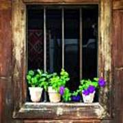 Time Worn Window With Bright Flowers Poster