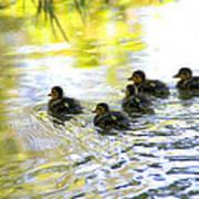 Tiny Baby Ducks Poster