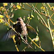 Tiny Bird In Wild Lettuce  Poster