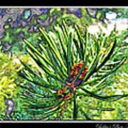 Tiny New Pine Cones Poster