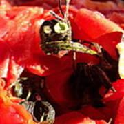 Tomato Creature Poster