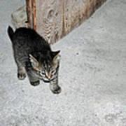 Tough Barn Kitten Poster