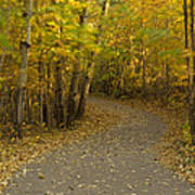 Trail Scene Autumn Abstract 3 Poster