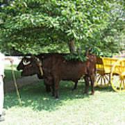 Transportation. Colonial Williamsburg. Virginia Poster