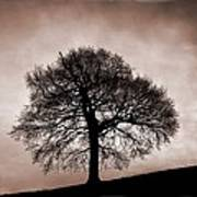 Tree Against A Stormy Sky Poster