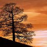 Tree Against A Sunset Sky Poster
