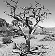 Tree At Cedar Ridge Bw Poster