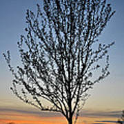 Tree At Sunset Poster