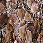 Tree Bark Close Up Poster