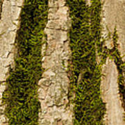 Tree Bark Mossy 4 C Poster