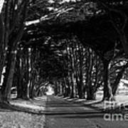 Tree Canopy Promenade Road Drive . 7d9977 . Black And White Poster