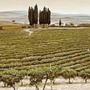 Tree Circle - Tuscany  Poster