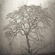 Tree Fog Poster