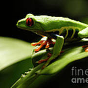 Tree Frog 13 Poster