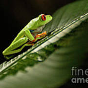 Tree Frog 2 Poster